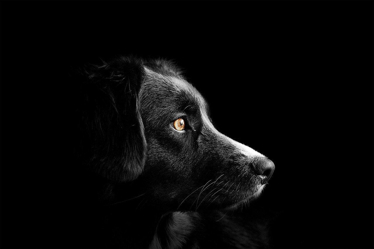 Wybór imienia dla psa- skąd wziąć inspirację?